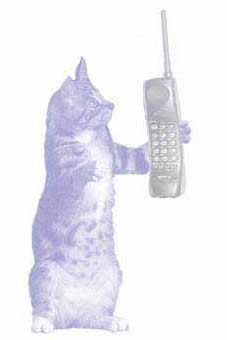 Telephone Consultations for Pet Owners from San Diego, CA